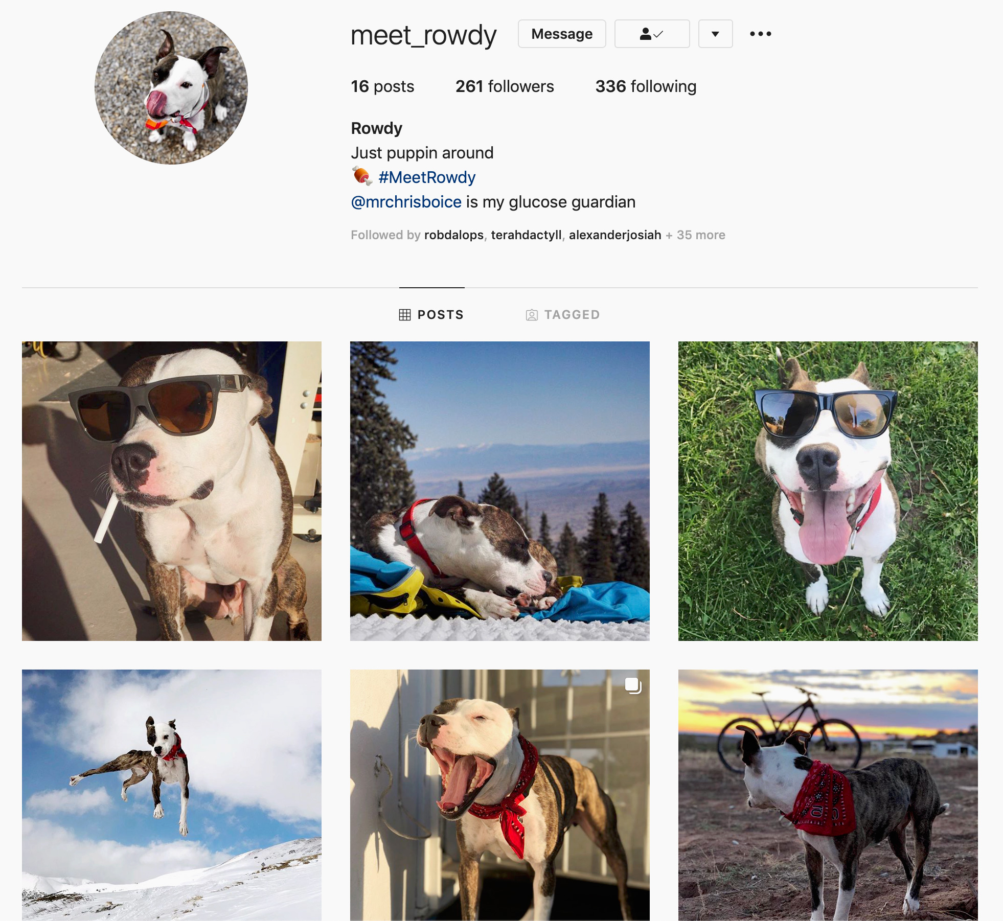 rowdy dog from Rally Van posting up with his Instagram page. Vanlife